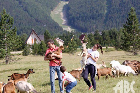 farma-koza-risovac-07129162