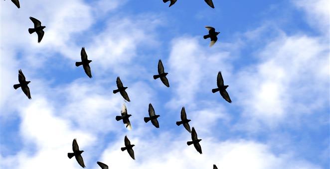 08082016-ptice