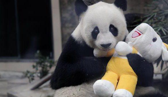 22012017-panda