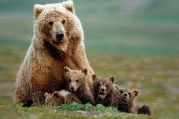 29042017-medvjed