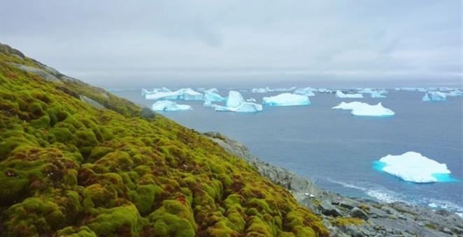 17062017-antartik