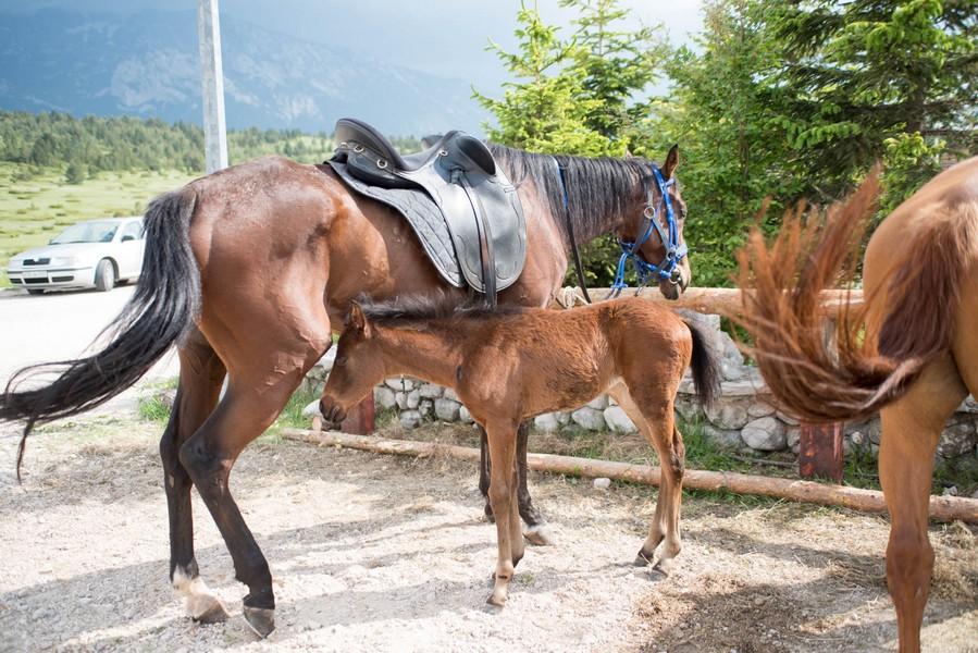 Image08blidinje-konji-jahanje