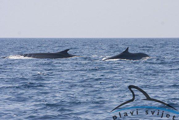 28082017-kitovi