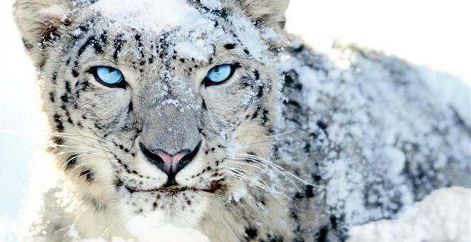 16092017-leopard