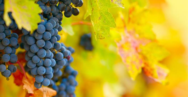 28102017-vino