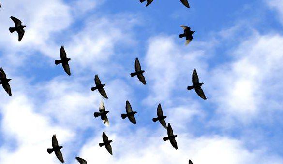 06112017-ptice