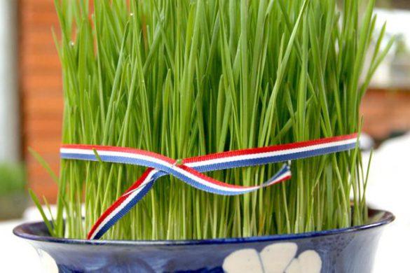 ?snimio Davor KIBEL, Osijek , 30.11.2012. Kuharica , kolaèi , žito ------ x3 mozaik color