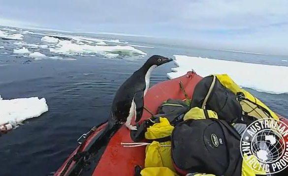 18012018-pingvin