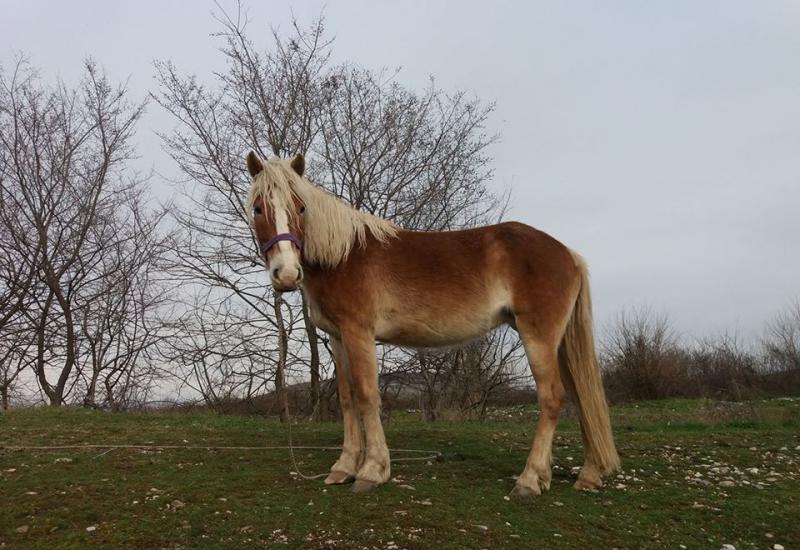 24052018-kobila-nelly
