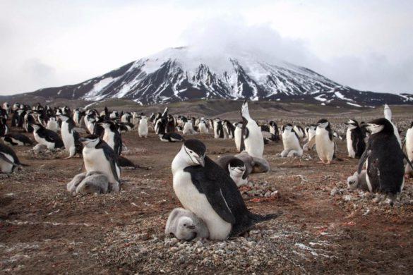 28052018-pingvin