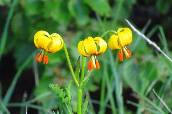 10062018-ljubusa-cvijece