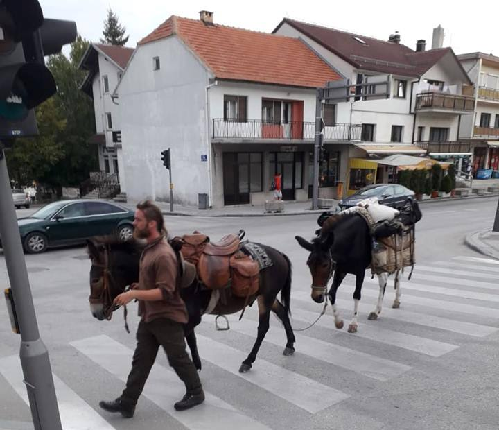 15092018-mule2