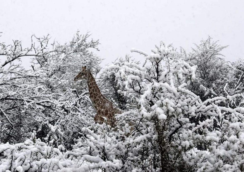 snijeg-afrika
